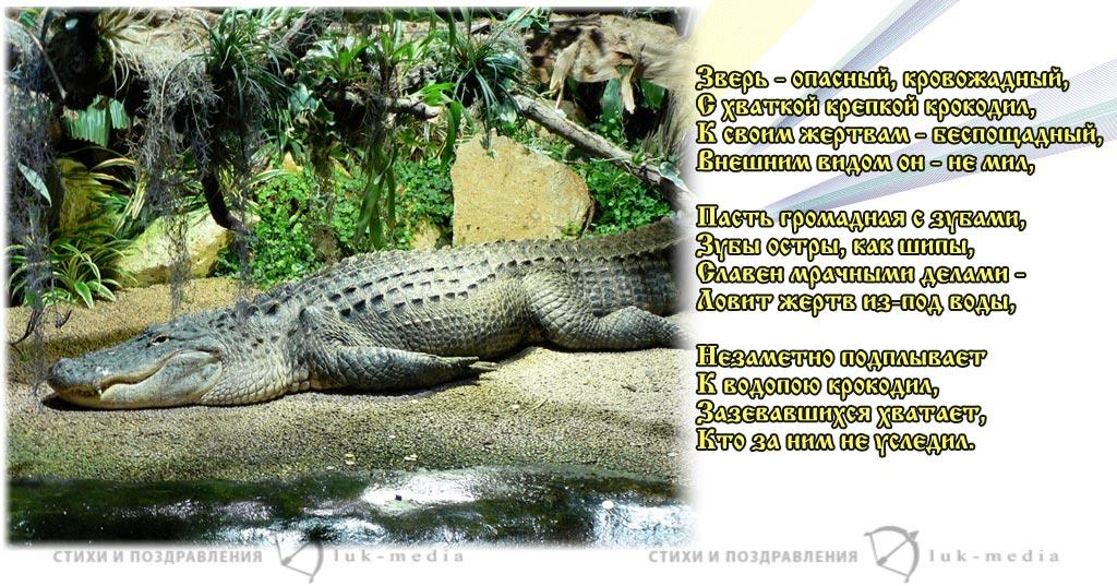 стихи о крокодиле