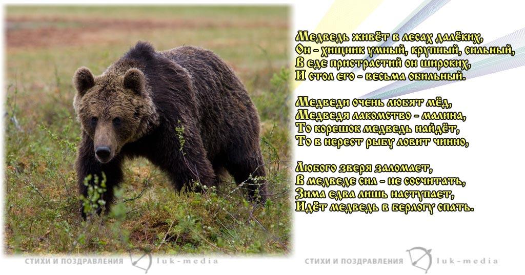 стихи про медведя