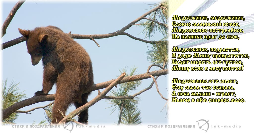 стихи про медвежонка