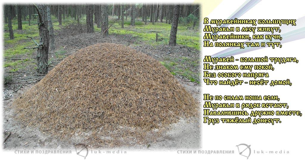 стихи о муравьях