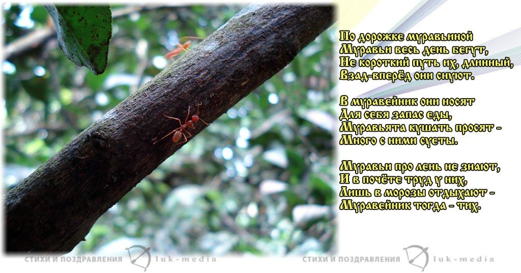стихи про муравьев