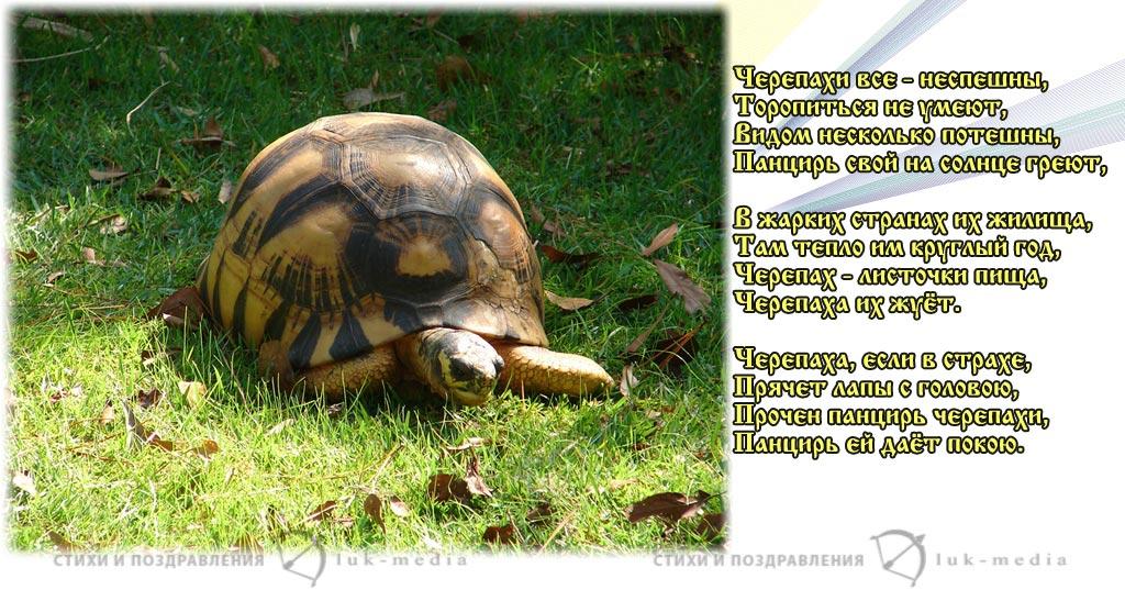 стихи про черепаху