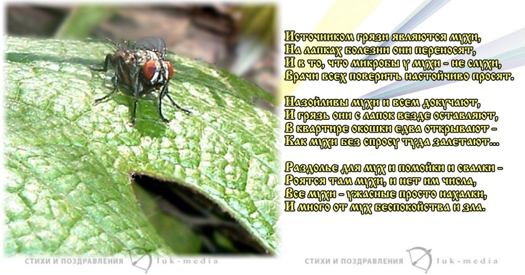 стихи про муху