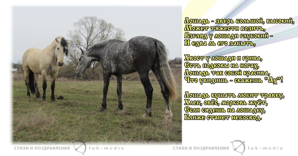стихи про лошадь