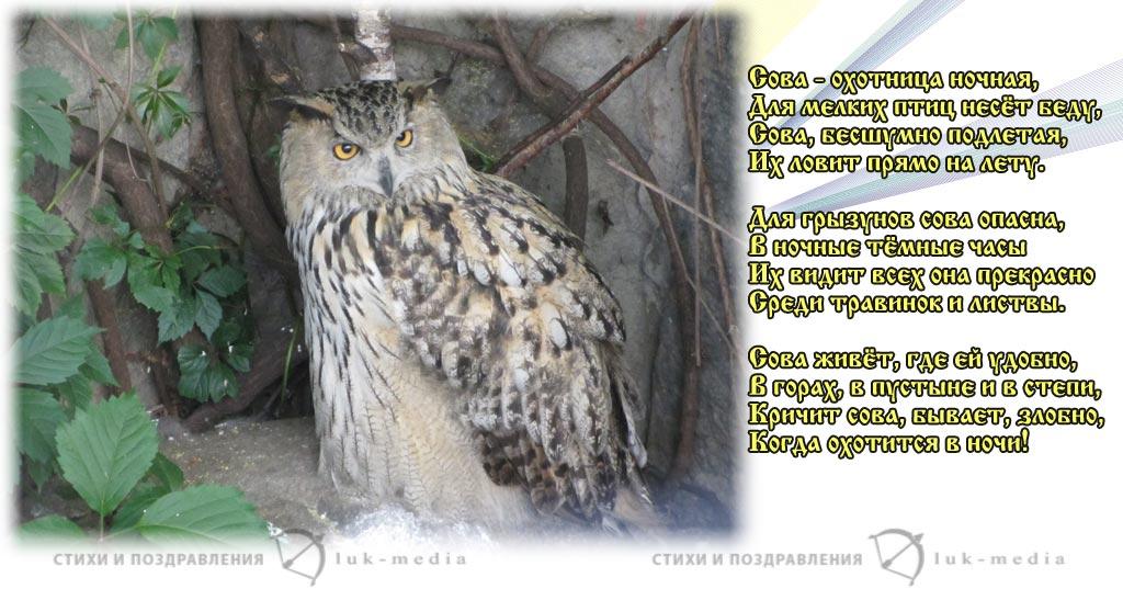 стихи про сову
