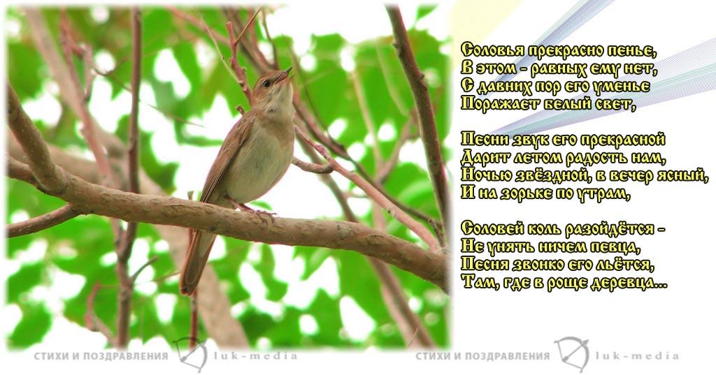 стихи про соловья