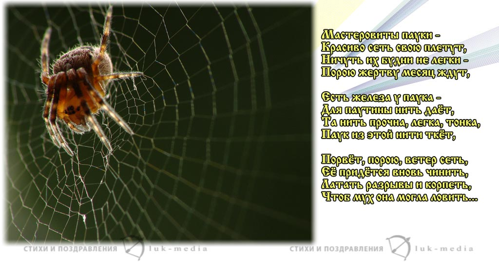 стихи детские про паука