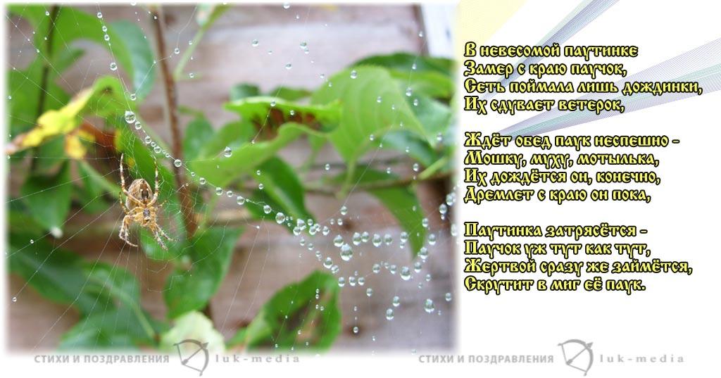 стихи про паучка