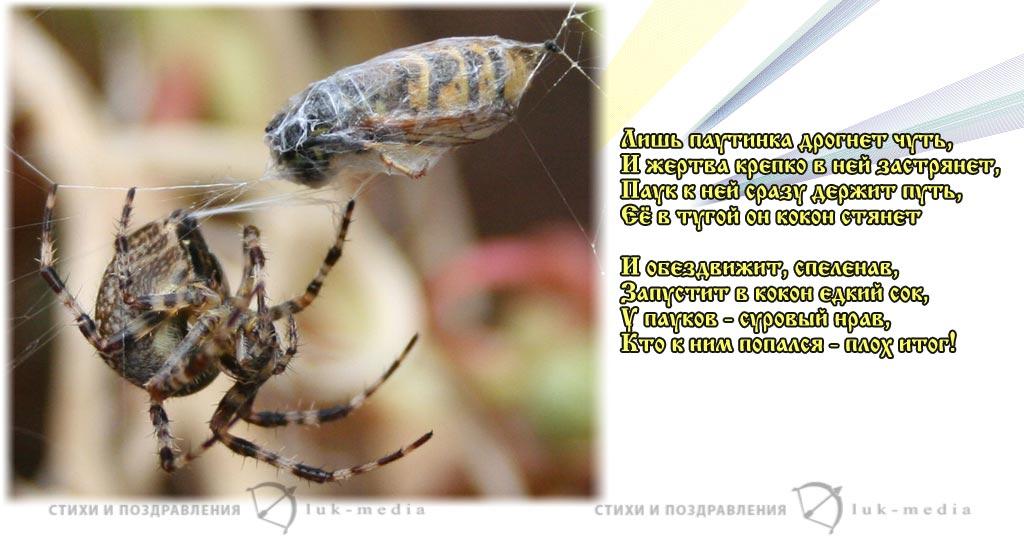стихотворение пауки