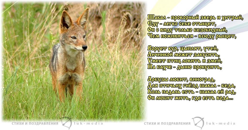 детские стихи про шакалов